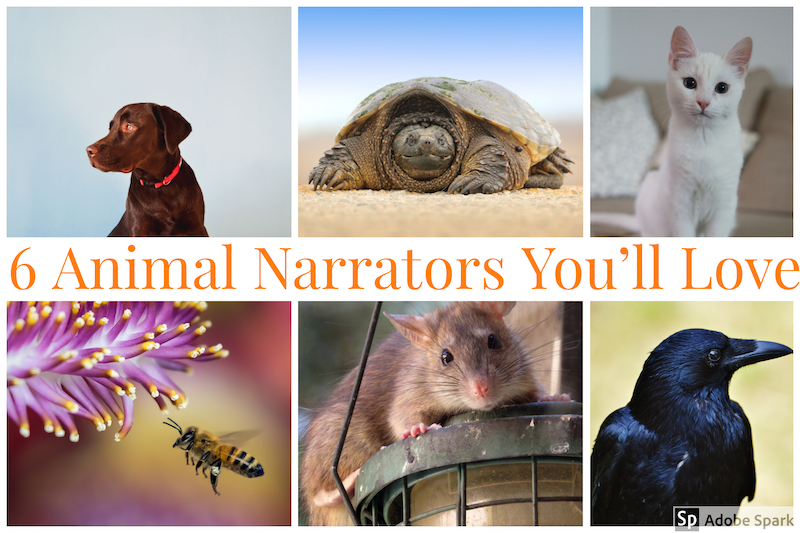 book blog animal narrators
